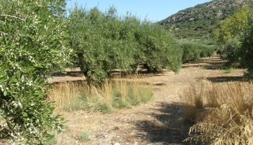 BPM4634 – 2086 m2 plot of land in Mardati, Agios Nikolaos.